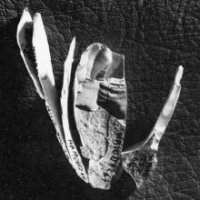 Helga-Abri - Frühmesolithikum - Zusammensetzung