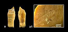hohle fels - fragment elfenbeinflöte a