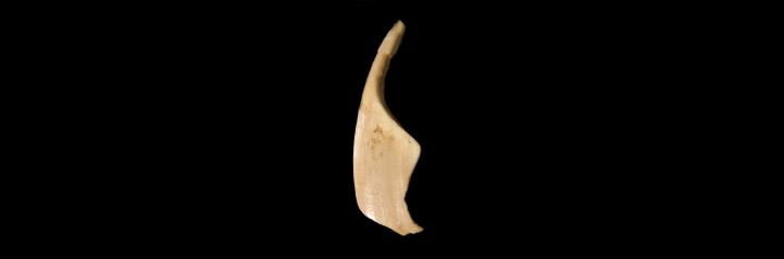 vogelherd - wildschweinvenus