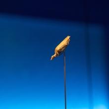hohle fels - wasservogel