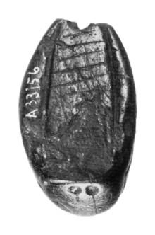 rosenstein-kleine scheuer - larve - unten