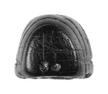 rosenstein-kleine scheuer - larve - hinten
